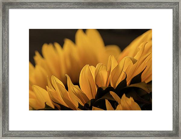 Soft Summer Light Framed Print