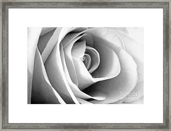 Softened Rose Framed Print