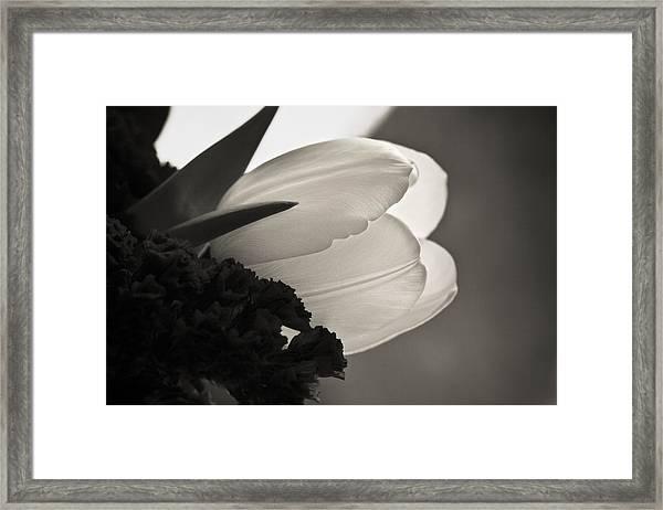 Lit Tulip Framed Print