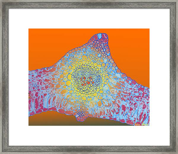 Solar Cells Framed Print