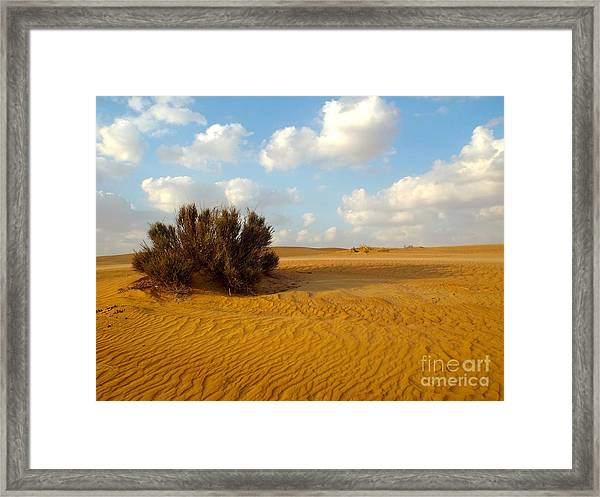 Framed Print featuring the photograph Solitary Shrub by Barbara Von Pagel
