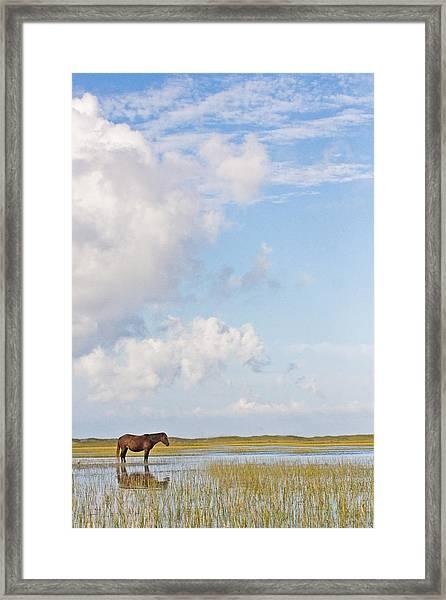 Solitary Wild Horse Framed Print