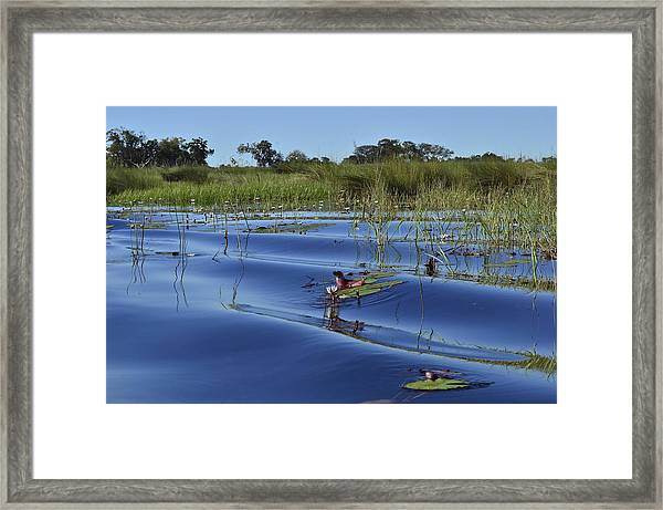 Solitude In The Okavango Framed Print