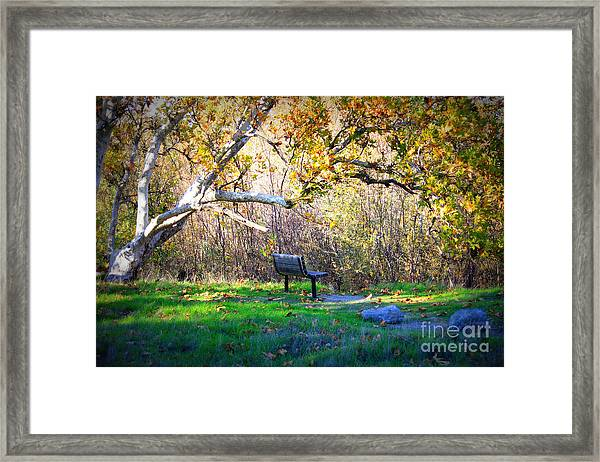Solitude Under The Sycamore Framed Print