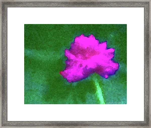 Solo Flower Framed Print