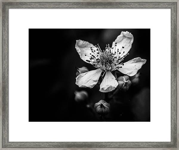 Solo In Ballet Framed Print