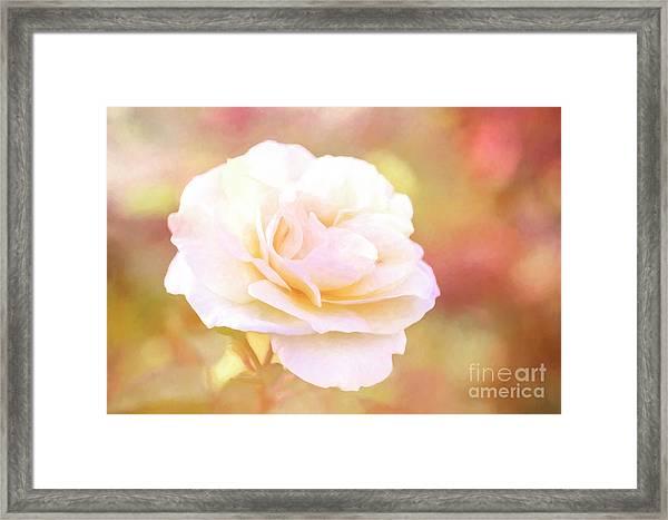 Solstice Rose Framed Print