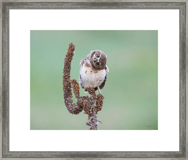 Some Days I Can't Tell Which Way Is Up Framed Print