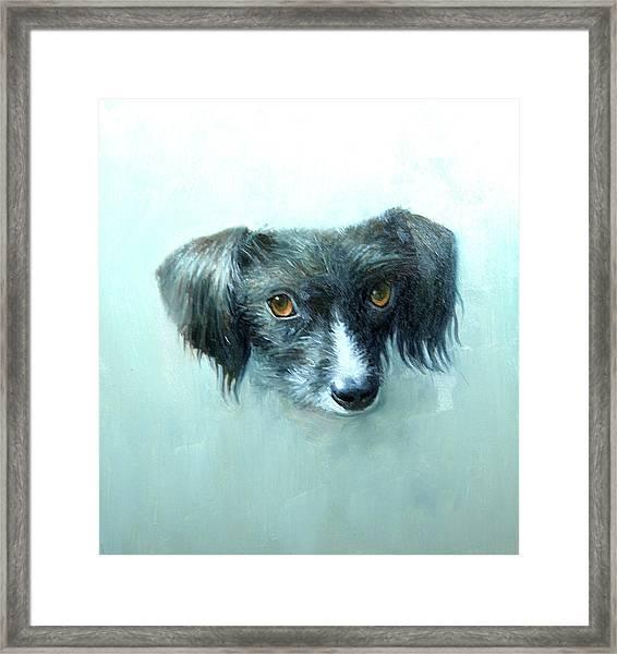 Someones Pet Framed Print