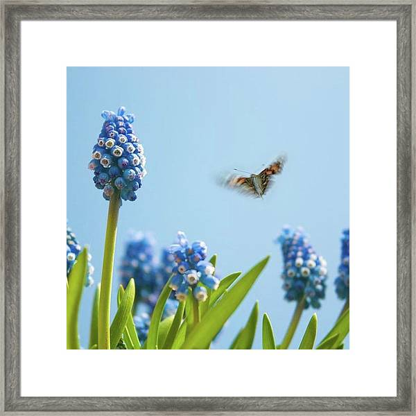 Something In The Air: Peacock Framed Print