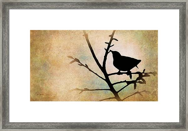Song Bird Framed Print