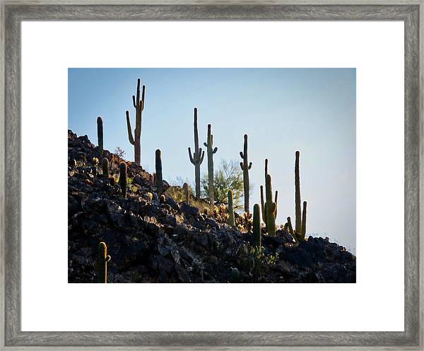 Sonoran Desert Saguaro Slope Framed Print