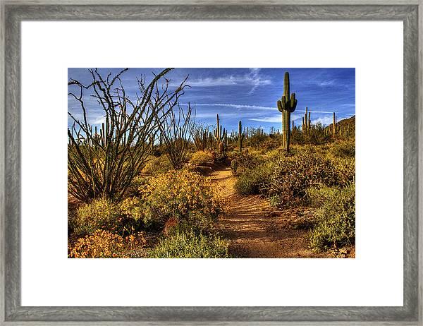 Sonoran Spring 01 Framed Print