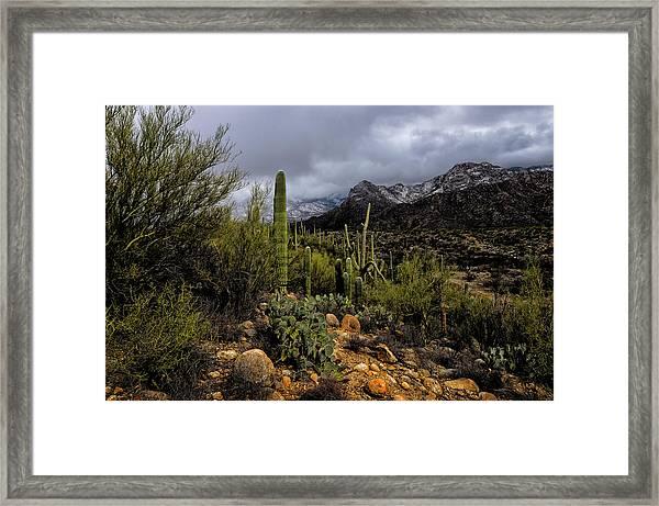 Sonoran Winter No.1 Framed Print