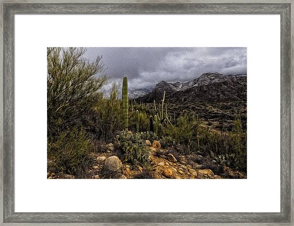 Sonoran Winter No.3 Framed Print