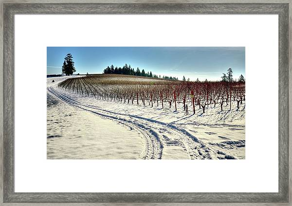 Soter Vineyard Winter Framed Print