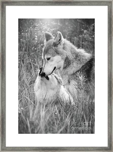 Soul Mates Black And White Framed Print
