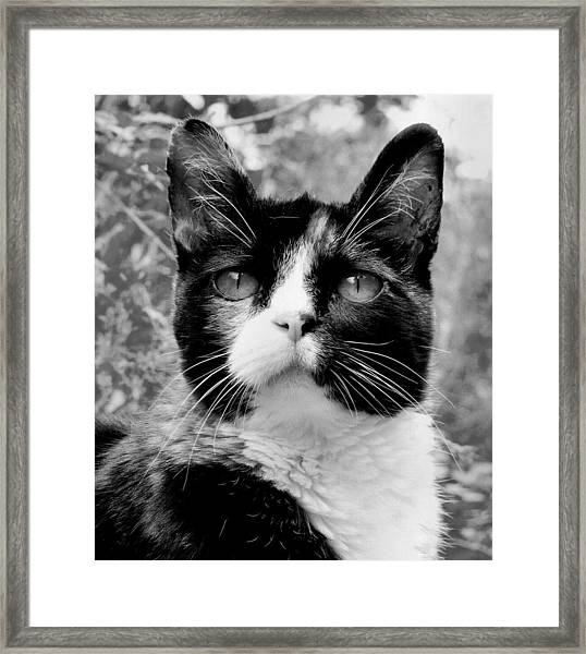Souls Great And Small Framed Print