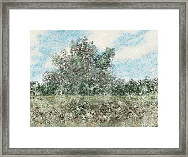 South Texas Brush Country I Framed Print