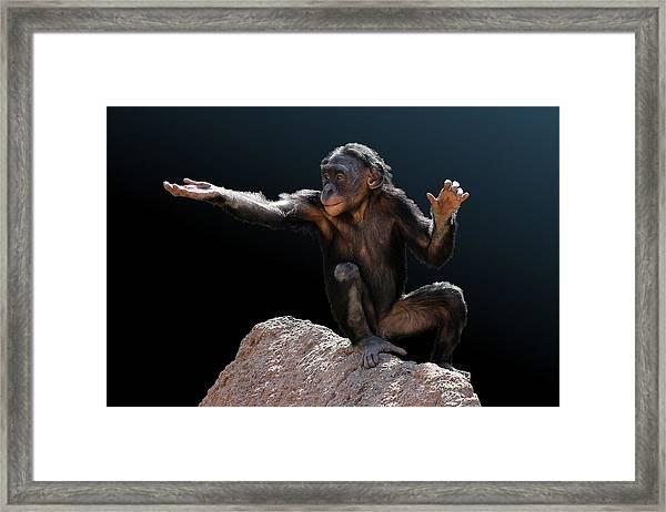 Spare Change? - Bonobo Framed Print