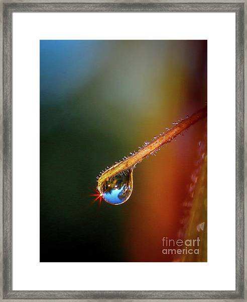 Framed Print featuring the photograph Sparkling Drop Of Dew by Tom Claud