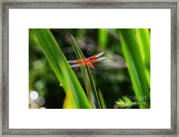 Sparkling Red Dragonfly Framed Print