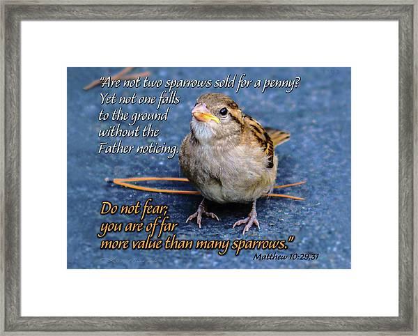 Sparrow Scripture Matthew 10 Framed Print