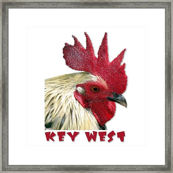 Framed Print featuring the photograph Special Edition Key West Rooster by Bob Slitzan