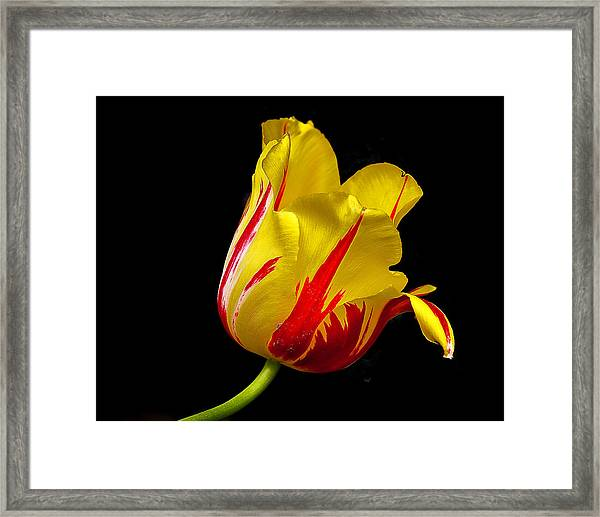 Special Flower For Someone Special Framed Print