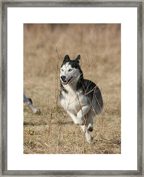 Speed Freak Framed Print