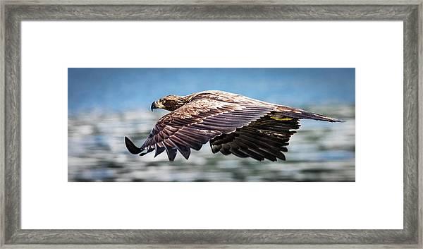 Speeding Framed Print