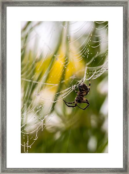 Spider And Spider Web With Dew Drops 04 Framed Print