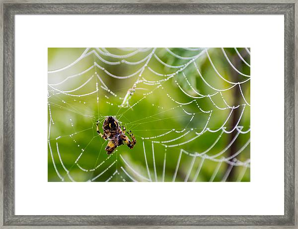 Spider And Spider Web With Dew Drops 05 Framed Print