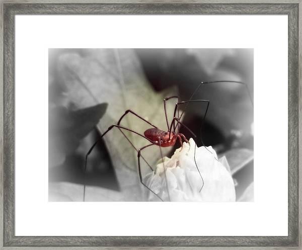 Spider On A Flower Framed Print