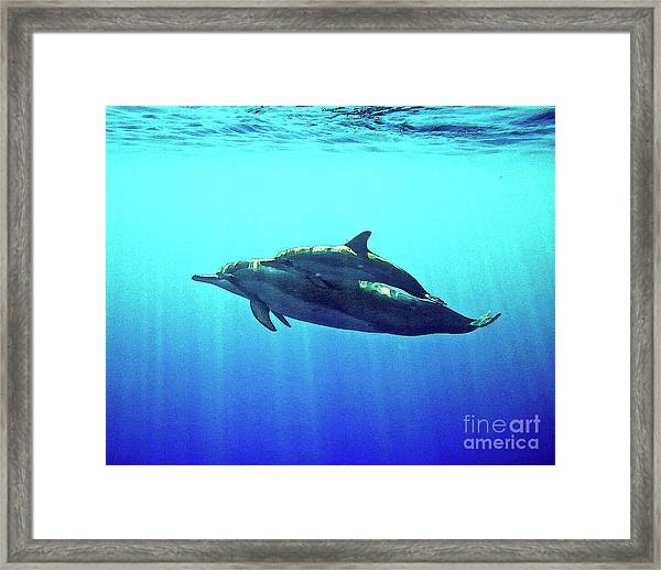 Spinner Dolphin With Baby Framed Print