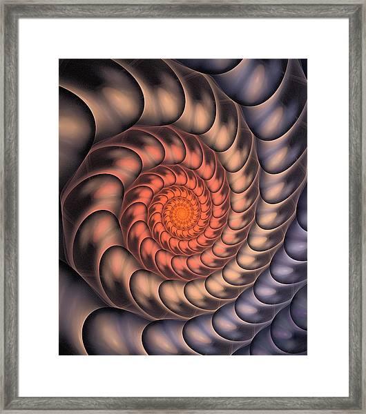 Spiral Shell Framed Print