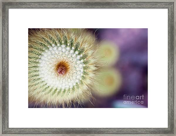 Spiraling  Framed Print