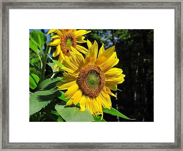 Spirals Of Sun Framed Print
