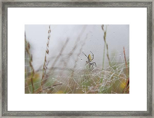 Spl-4 Framed Print