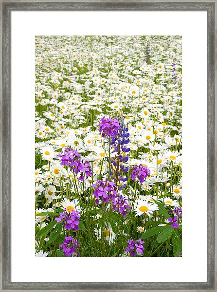 Splash Of Purple Framed Print