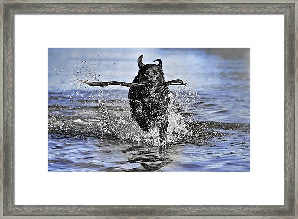 Splashing Fun Framed Print