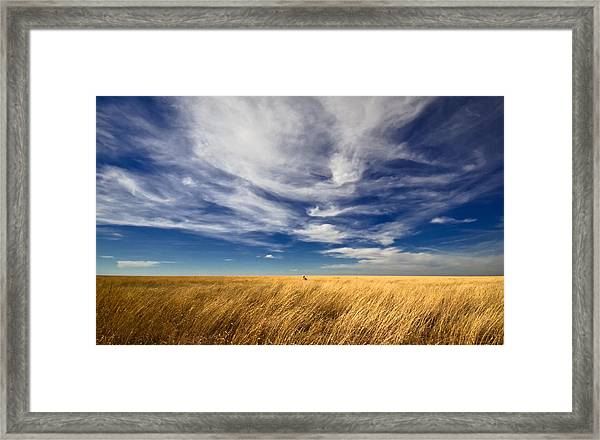 Splendid Isolation Framed Print