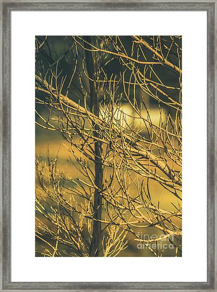 Spooky Country House Obscured By Vegetation  Framed Print