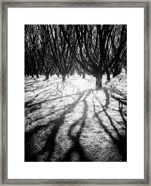 Spooky Forest Framed Print