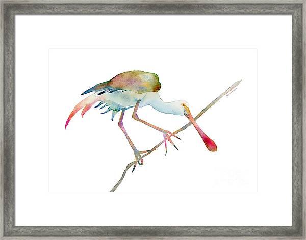 Spoonbill  Framed Print