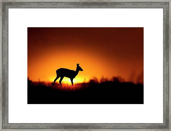 Spotlight Framed Print