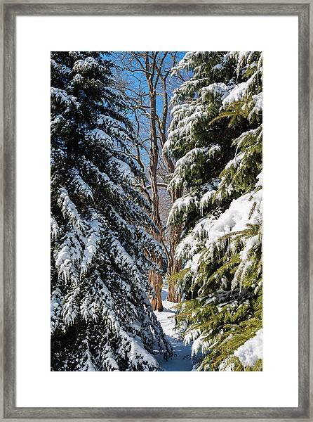 Spring Approaching Framed Print