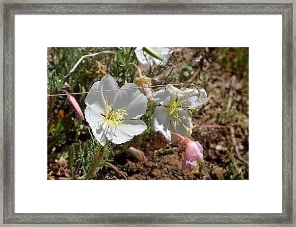 Spring At Last Framed Print
