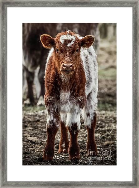Spring Baby Framed Print