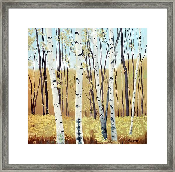 Spring Birches Framed Print